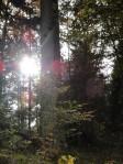 raggi di sole nel sottobosco