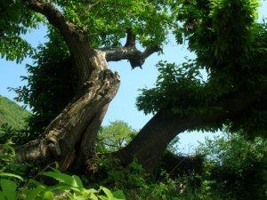 albero di notevoli dimensioni