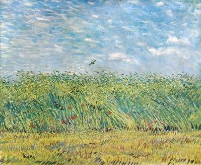 limitare un campo di grano