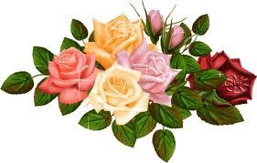 rose di Santa Rita