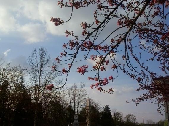 Aprile a Silea