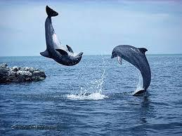 delfini felici