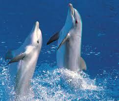 delfini6