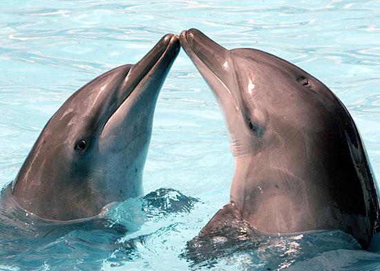 delfini_ostia_subitonews