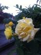 il mio giardino 018
