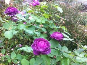 Rose di novembre