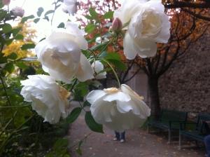 fiorisce la speranza