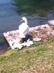 Nuova vita sul fiume Sile
