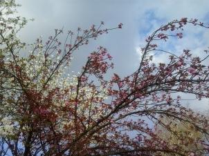 Primavera a Silea