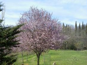 Primavera a Romena